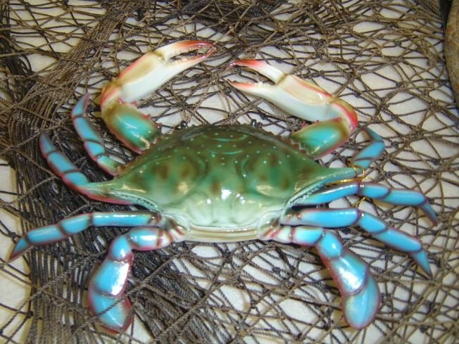 blue-crab-